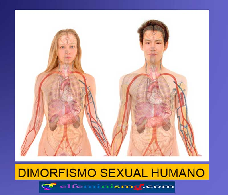 dimorfismo-sexual-hombre-y-mujere-elfeminismo