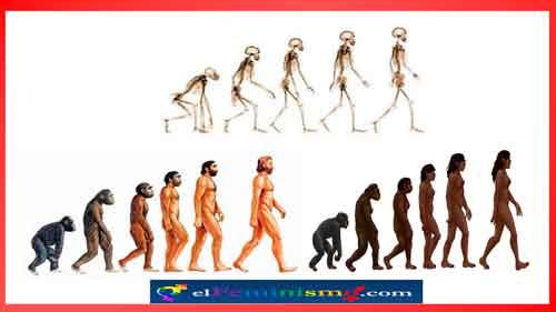 evolucionismo-no-androcentrico